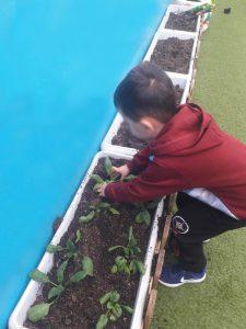 Φυτεύοντας Σπόρους στον κήπο5